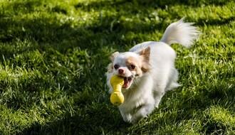 NOVO NASELJE:  Vlasnici pasa male rase strahuju za svoje ljubimce