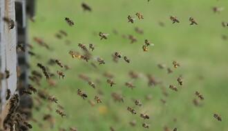 Pčelarski sajam Dunavskog regiona u petak i subotu u Novom Sadu
