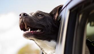 UPOZORENJE TAKSISTIMA: Kažnjiva dodatna naplata za prevoz životinja