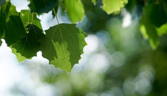 """Gradsko zelenilo"": Liman 1 uskoro bogatiji za 152 stabla (FOTO)"