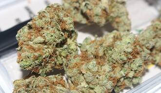 Karlovčaninu (20) krivična prijava zbog posedovanja 120 grama marihuane