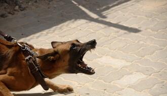 Čopor pasa lutalica napao ženu na keju