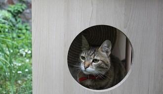 """""""MJAUTORITET"""": Upoznajte ekipu porodične radionice za izradu nameštaja za mačke (FOTO)"""