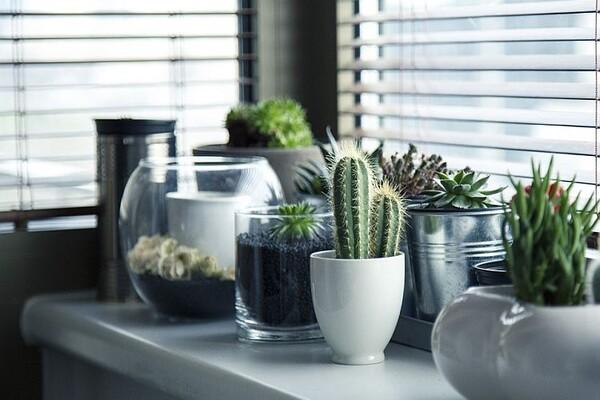 Biljke za kancelariju koje pročišćavaju vazduh