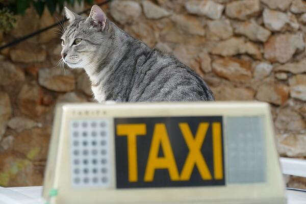 ISTRAŽUJEMO: Postoji li u Novom Sadu taksi udruženje koje prevozi kućne ljubimce?