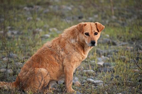 Kompanija NIS zabranila hranjenje pasa u okviru firme, udruženja ih upozoravaju na obaveze