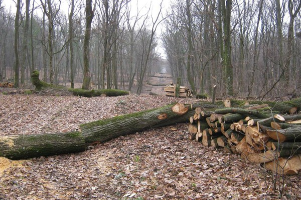VIDEO: Fruška gora na Svetski dan šuma prepuna posečenih stabala