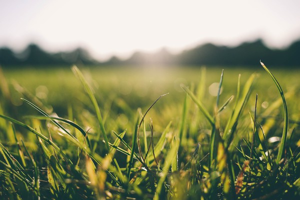 VREME: Pretežno sunčano, popodne promenljivo