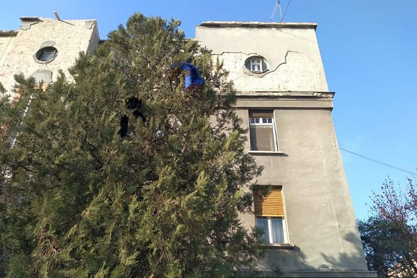 Nervno rastrojen muškarac bacao cigle s vrha zgrade u Vojvođanskih brigada