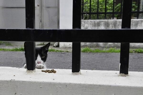 ZOOHIGIJENA: Prihvatilište u Novom Sadu dobiće i objekat za mačke