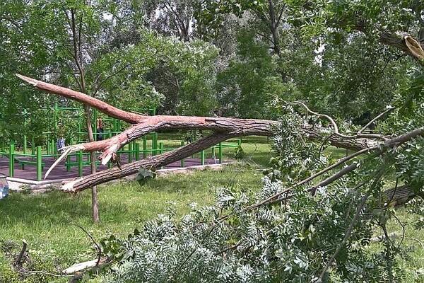 SINOĆ U GRADU: Olujni vetar oborio više od 20 stabala, nema povređenih (FOTO)