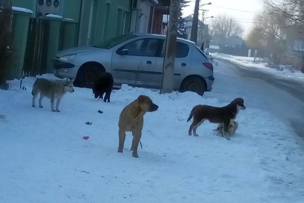IZ PRVE RUKE: Čopor pasa bez vlasnika napao prolaznike na Telepu (FOTO)