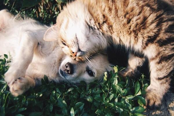 Pas ili mačka - izbor puno govori o vama!