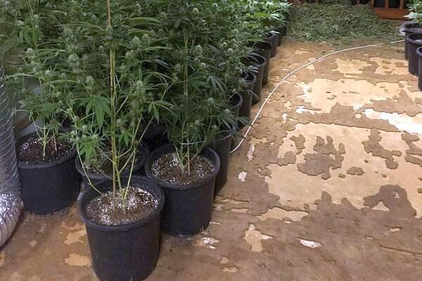 FOTO: U NS i Krušedolu otkrivene laboratorije za proizvodnju marihuane