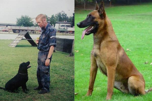 Pas novosadske policije uginuo na dan sahrane svog vodiča!
