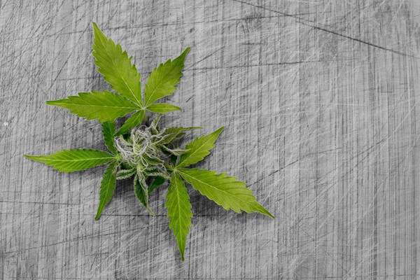 Švercovali semenke marihuane iz Španije u Vrbas i Novi Sad