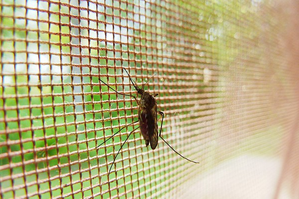 Kako da smanjite rizik od zaraze virusom Zapadnog Nila