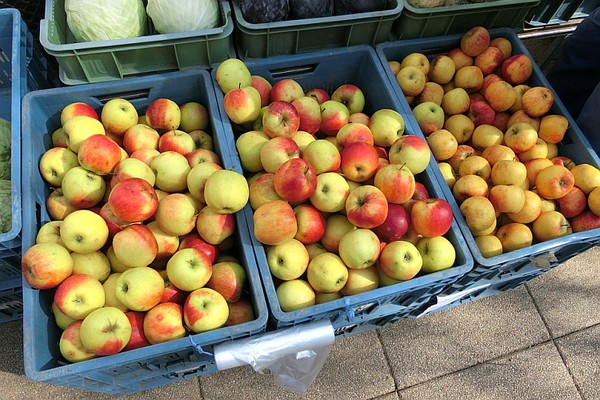 Besplatno voće za najugroženije Novosađane