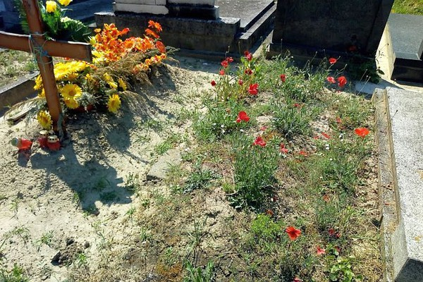 MATIČNA KNJIGA UMRLIH: Preminulo šezdesetoro Novosađana