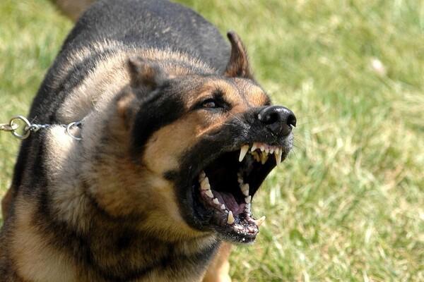 """PASTEROV ZAVOD: """"Vlasnici su krivi što njihovi psi ujedaju češće od lutalica"""""""