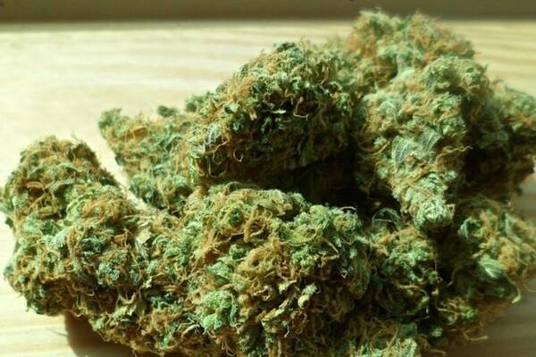 HRONIKA: Marihuanu iz Crne Gore rasturali po Novom Sadu