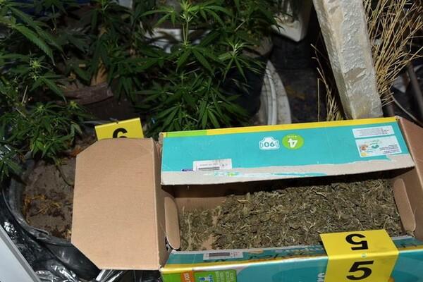 FOTO: Novosadska policija otkrila laboratoriju za proizvodnju marihuane