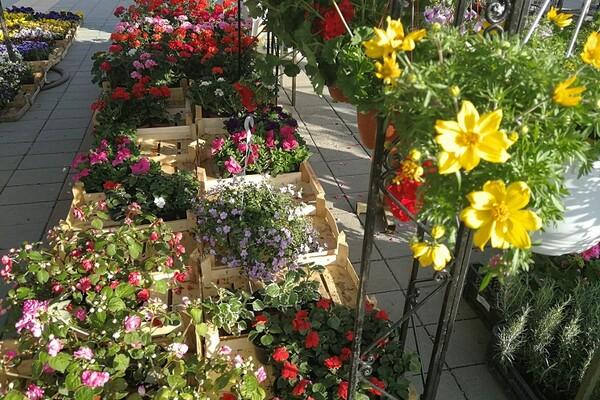 FOTO: Velika ponuda prve prolećne Cvetne pijace