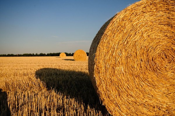 Potencijali za saradnju Gruzije i Vojvodine u poljoprivredi