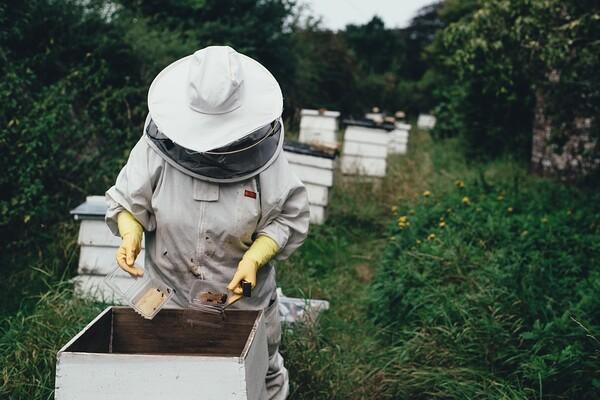 UPOZORENJE PČELARIMA U NS I BEOČINU: Tretmani protiv komaraca iz vazduha i sa zemlje