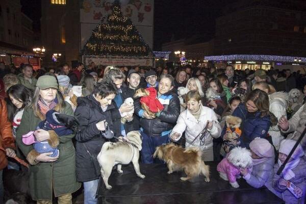 """Dan kućnih ljubimaca u subotu na """"Novosadskom Winter Festu"""""""
