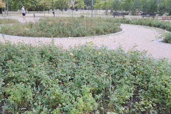 Građani se žale na pacove u Limanskom parku