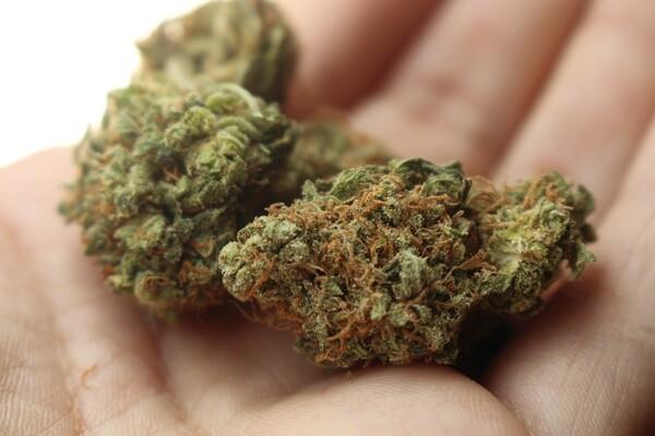Osamnaestogodišnjak prodavao marihuanu u Novom Sadu