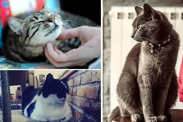 Ovo su najpoznatije kafanske mačke u Novom Sadu