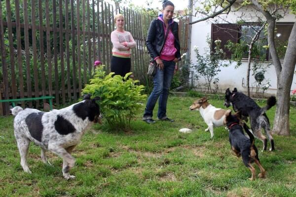 U poseti SPANS-u: Sigurna kuća za novosadske životinje
