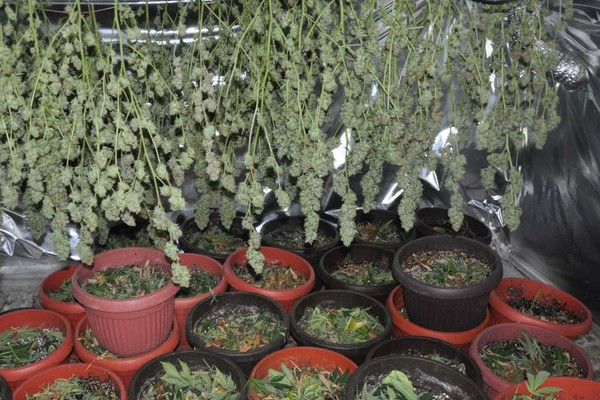 FOTO: U akciji MUP zapljenjene veće količine droge i oružja, hapšenja i u Novom Sadu