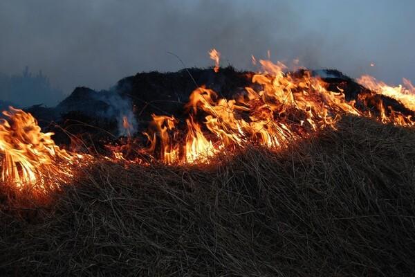 Požar na Fruškoj gori u rejonu Beočina