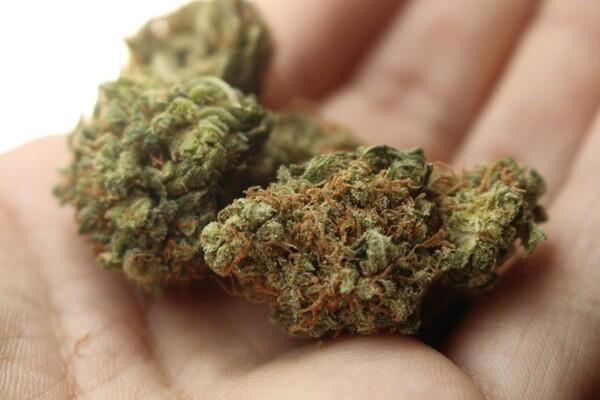 Novosadska policija zaplenila oko dva kilograma marihuane