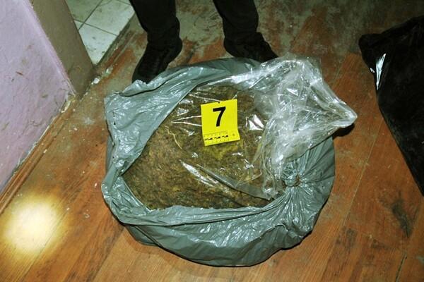 U kući u okolini Novog Sada zaplenjeno više od 27 kg marihuane
