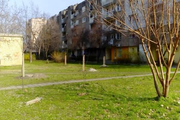 """FOTO: Radovi """"Gradskog zelenila"""" na Grbavici i Limanu III"""
