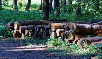 Seča šume na Fruškoj gori na zahtev SPC