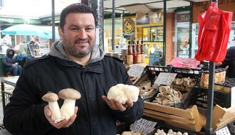 PIJAČNA PONUDA: Evo gde u gradu možete kupiti vrste gljiva koje su i ukusne i lekovite (FOTO)