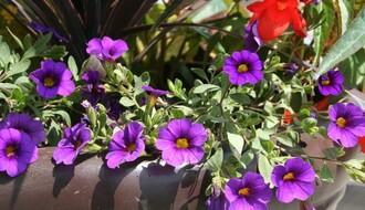 Narednog vikenda počinje prolećni ciklus Cvetnih pijaca