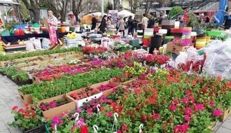 Druga prolećna Cvetna pijaca u petak i subotu ispred Spensa