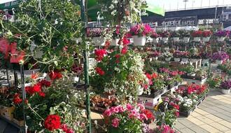 U petak i subotu treća prolećna Cvetna pijaca