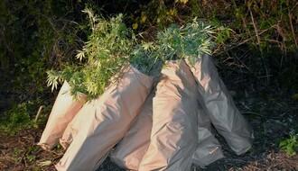 FOTO: Beočinac uhvaćen sa velikom količinom droge i oružja