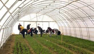 U okviru IPA projekta plastenik za Poljoprivrednu školu u Futogu