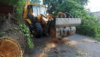 FOTO: Tokom jučerašnjeg nevremena izvaljena dva stabla, jedno preprečilo put na Ribarcu