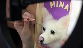 Mačak Hektor poslužio za poslovnu ideju o psima (FOTO)