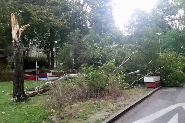 FOTO: Olujni vetar rušio stabla i lomio grane
