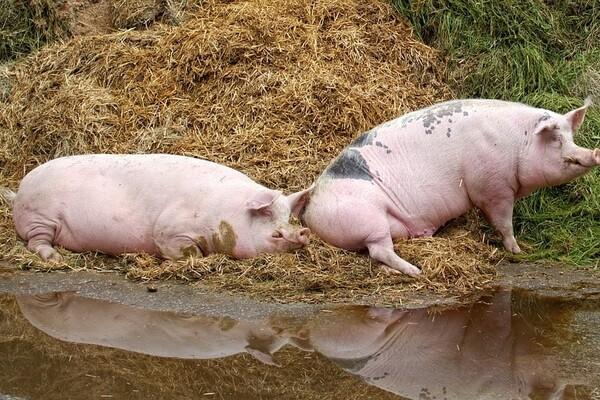 """Izlivanje fekalija sa farme svinja u Temerinu ugrožava park prirode """"Jegrička"""""""